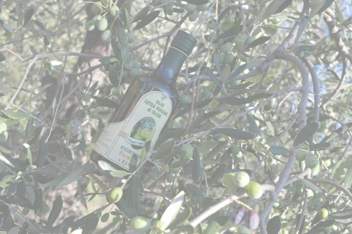 sfondo ulivi di Andora